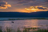 Brown bears in the Brooks River, sunrise over the Brooks River and Naknek lake, Katmai National Park, Alaska.