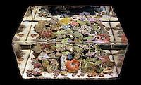 Zero Edge Reef Aquarium