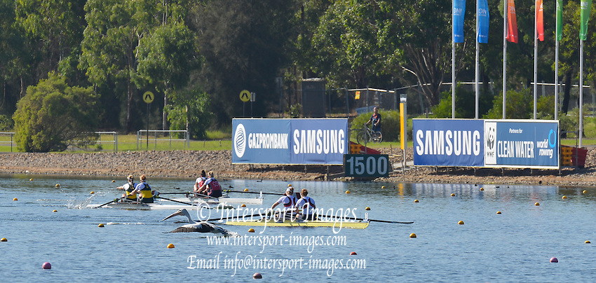 Sydney, Australia.  Women's Pair, GBR W2_ Bow Helen GLOVER and Polly SWANN, in the final, disturb a fishing Pelican.  FISA World Cup I. and  Sydney International Rowing Regatta. Sydney International Rowing Centre, Penrith Lakes, NSW. Sunday   24/03/2013 [Mandatory Credit. Peter Spurrier/Intersport Images]..