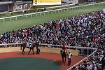 Spectators watch the horses in the parade ring before the John Peel Handicap on 29 March 2017, at Happy Valley Racecourse in Hong Kong, China. Photo by Chris Wong / Power Sport Images