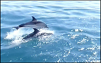 Dorset dolphins look like their in the Tropics.