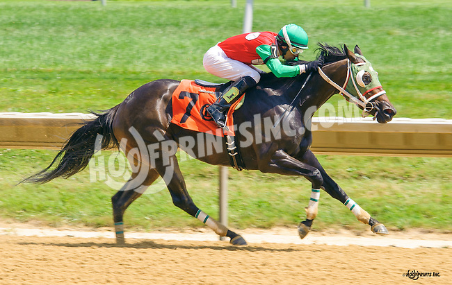 Outwithbigdaddy winning at Delaware Park on 7/21/16