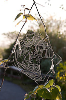Spiderweb with early morning dew at Royal Palm Visitor Center, Everglades National Park, Florida
