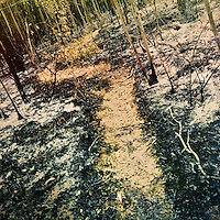 The charred eucalyptus trees and burned forest vegetation are seen on the burn area in Guanguiltagua, the Metropolitan Park of Quito, Ecuador, 28 September 2013. Due to the massive fire that took place on September 22, 2013, about 50 hectares of the urban forest ecosystem were burned down.