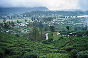An overview of Pedro Tea Estate in Nuwareliya in Central Sri Lanka.  Photo: Sanjit Das/Panos
