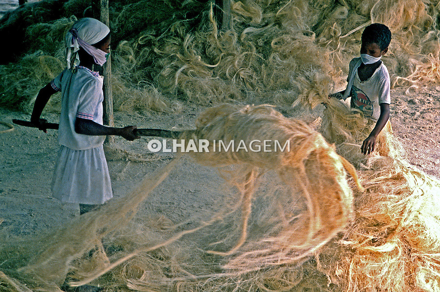 Criança trabalhando em colheita de sisal. Bahia. 1987. Foto de Salomon Cytrynowicz.