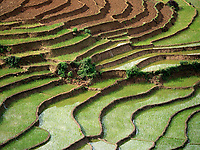 Sapa Rice Terraces, NorthVietnam