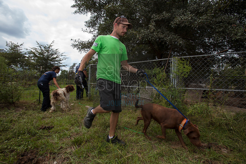 Chris Pistolis, facility and safety coordinator for the Humane Society of Charlotte, leads away a dog found during a raid on a puppy mill in Johnston, SC on Tuesday, Sept. 11, 2012. HSUS workers found over 200 dogs, nine horses and 30-40 fowl.
