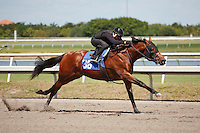 #36Fasig-Tipton Florida Sale,Under Tack Show. Palm Meadows Florida 03-23-2012 Arron Haggart/Eclipse Sportswire.