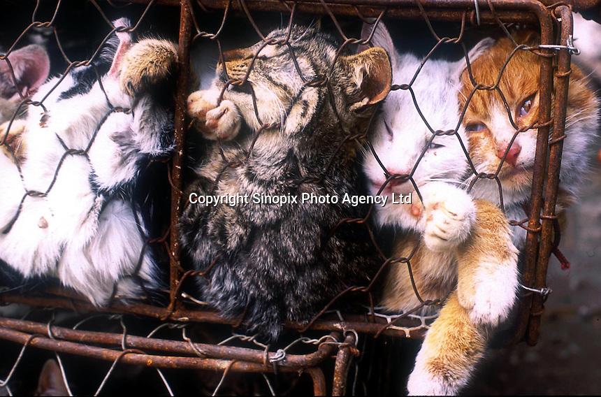 CAT HORROR: GUANGZHOU, CHINA | Sinopix Photo Agency
