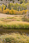 Green Creek and quaking aspen (Populus tremuloides), fall, Toiyabe National Forest, California
