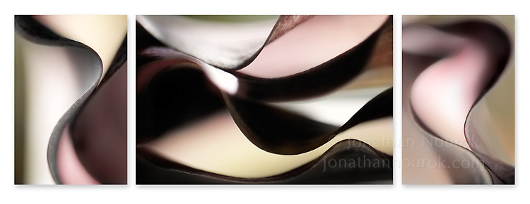 Close-up photographic triptych of calla lily flowers.