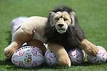 British & Irish Lions training session.The Lions mascot.Vale Resort.15.05.13.©Steve Pope