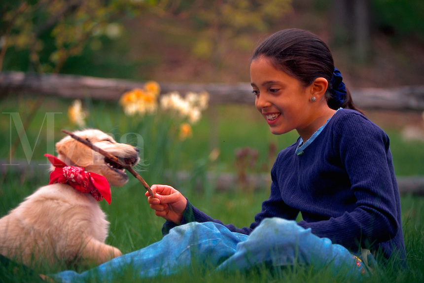 Ten year old girl playing with her golden retriever puppy; puppy tries to chew on a stick.