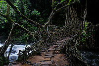 A man made bridge engineered out of roots of live rubber trees in Mawlynnong village located in East Khasi Hills - the wettest place on earth. This part of East Khashi is comparatively drier, hence, has hardier perennial temperate forests. Khasi people are nature-friendly and have crafted and maintained these handmade Rubber tree root bridges for centuries. Arindam Mukherjee