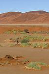 Parc national du Namib Naukluft. Dunes de Sossusvlei.Namibie Afrique
