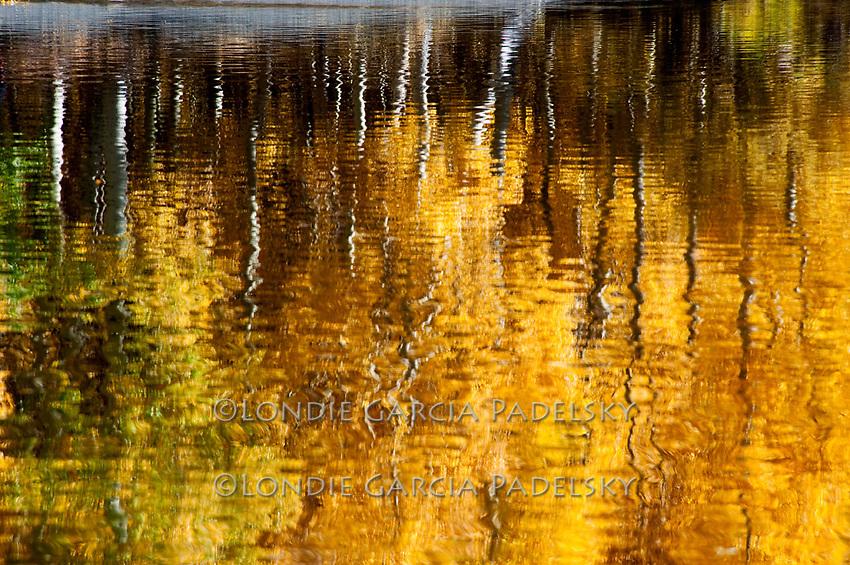 Autumn aspen trees reflect in a lake in the Sierra Nevada, California