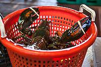Live lobster at seafood market.