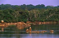 Reserva Extrativista de Pedras Negras <br />rio Guaporé - Rondônia