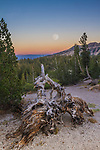 A full moon rises over the Minaret viewpoint. An old weathered tree trunk frames the foreground. Sunset glow on the horizon.