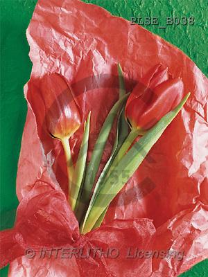 Jacek, FLOWERS, portrait, macro, photos, PLSE, PLSEB038,#F# Blumen, flores, retrato