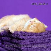 Xavier, ANIMALS, REALISTISCHE TIERE, ANIMALES REALISTICOS, cats, photos+++++,SPCHCATS831,#A#