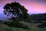 Sunset light on clouds over oak tree above the Central Valley, Santa Cruz Island, Channel Islands, California