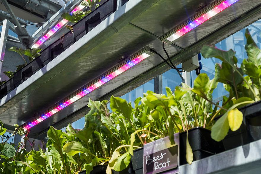 Nederland, Utrecht, 20180419<br /> The Green House, een duurzaam restaurant in Utrecht. Alle gebruikte materialen zijn gerecycled en op de bovenverdieping is een kas waar sla en kruiden worden geteeld. Dat scheelt een grote koeling en de klant krijgt iets dat heel erg vers is.<br /> <br />  Foto: (c) Michiel Wijnbergh