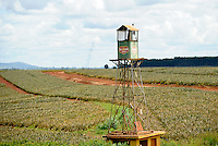 KENYA Del Monte pineapple plantation / Kenia Anannas Farm von Del Monte