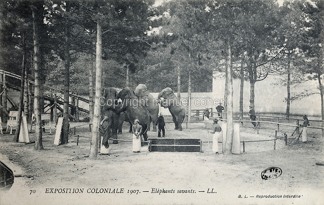 Training Indian elephants to walk on their hind legs, in the India section of the Colonial Exhibition of 1907, held in the Jardin d'Agronomie Tropicale, or Garden of Tropical Agronomy, in the Bois de Vincennes in the 12th arrondissement of Paris, postcard from the nearby Musee de Nogent sur Marne, France. The garden was first established in 1899 to conduct agronomical experiments on plants of French colonies. In 1907 it was the site of the Colonial Exhibition and many pavilions were built or relocated here. The garden has since become neglected and many structures overgrown, damaged or destroyed, with most of the tropical vegetation disappeared. The site is listed as a historic monument. Picture by Manuel Cohen / Musee de Nogent sur Marne