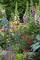 Digitalis, Delphinium, hosta, red Dianthus in pot container, ageratum, aquilegia, alchemilla, achillea , geranium, euphorbia, in colorful spring garden with lots of different kinds of plants