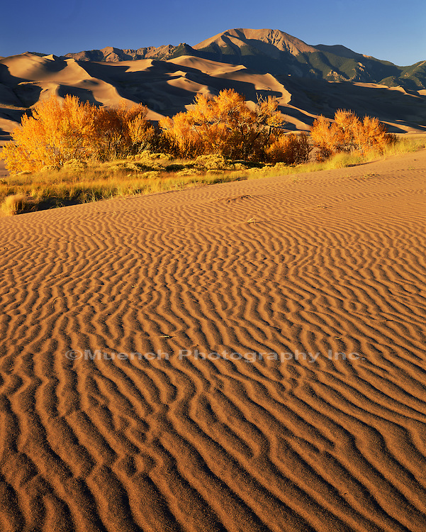 Autumn, Great Sand Dunes N.P.