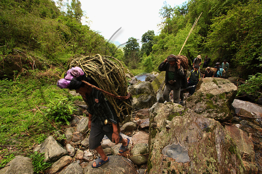 Approaching the cliff on foot traverses a jungle of bamboo and rhododendron. Thirteen men take part in the harvest.