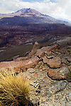 Andean Mountain Cat (Leopardus jacobita) scat, Abra Granada, Andes, northwestern Argentina
