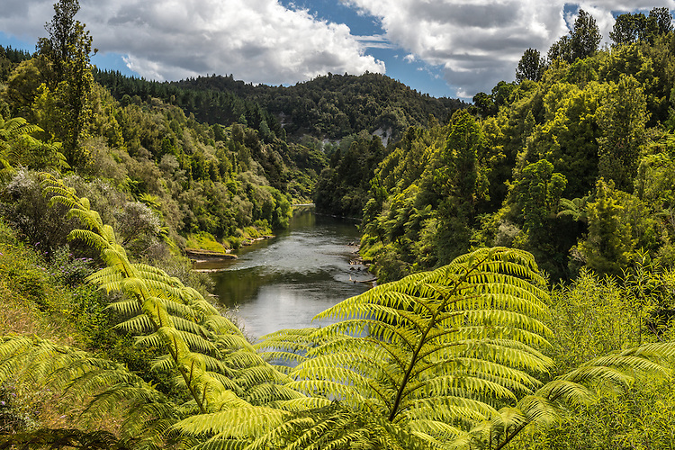 Large tree fern frames this view of the bushclad Wanganui River.  Taumarunui, KIng Country New Zealand - canvas prints, fine art print