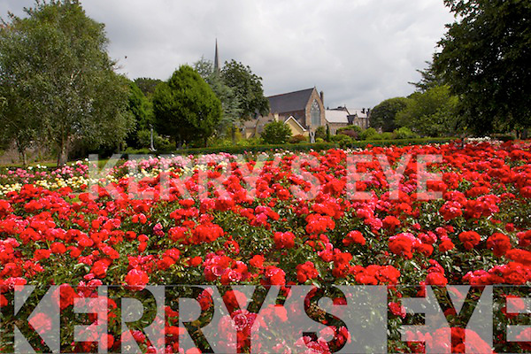Rose Garden in Tralee town park.