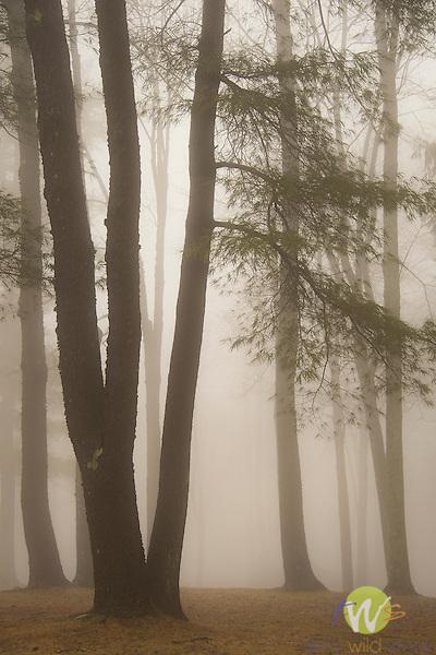 Village park in fog.