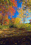 Pawtuckaway State Park - Round Pond Road in Nottingham, New Hampshire USA during the autumn months