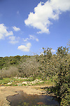 Ein At in the Upper Galilee