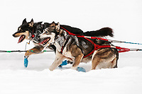 Mike Williams Jr. dogs run on the trail at the Finger Lake checkpoint during the 2018 Iditarod race on Monday March 05, 2018. <br /> <br /> Photo by Jeff Schultz/SchultzPhoto.com  (C) 2018  ALL RIGHTS RESERVED