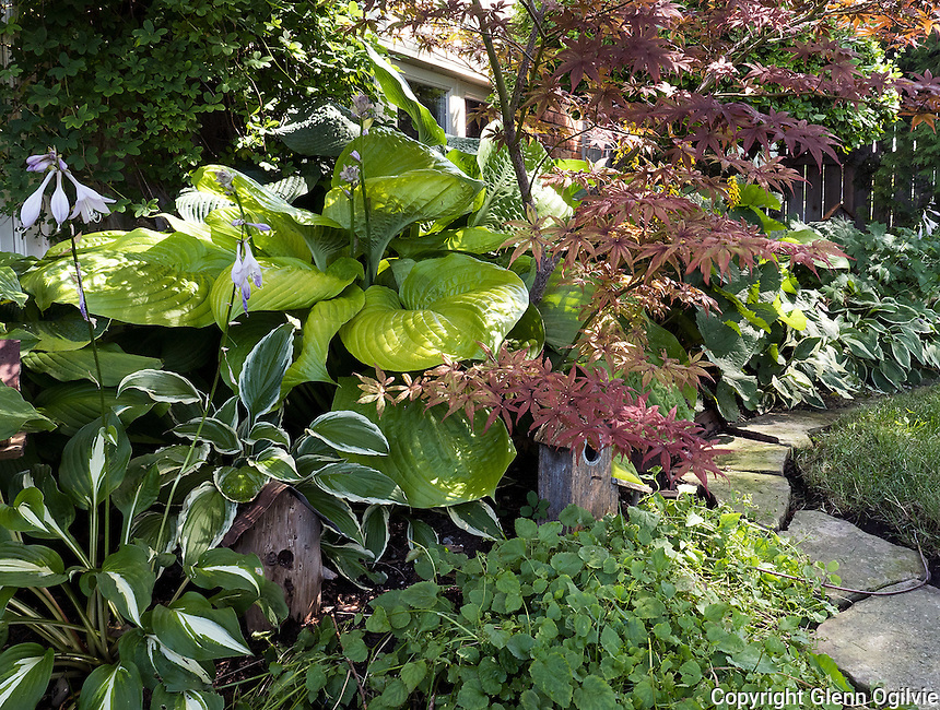 Irene Reiss<br /> 1105 Gurd St<br /> 519-542-9780<br /> ridj@cogeco.ca<br /> <br /> My yard is a cottage style garden of plants that grow in shade. Many have been cuttings given to me by family and friends and I in turn share with friends and  neighbours. It is a challenge to see what will grow with the limited passing sunlight that I get. My garden is peaceful and calm and I prefer white flowers.<br /> Irene Reiss
