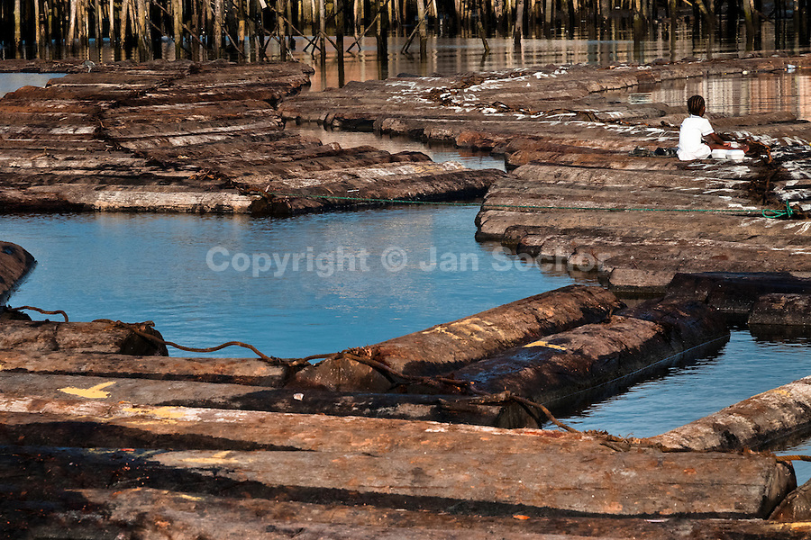 Logs from the Pacific rainforest float in the water behind a sawmill in Tumaco, Colombia, 11 June 2010. Tens of sawmills located on the banks of the Pacific jungle rivers generate almost half of the Colombia's wood production. The wood species processed here (sajo, machare, roble, guabo, cargadero y pacora) are mostly used in the construction industry and the paper production. Although the Pacific lush rainforest in Colombia is one of the most biodiverse area of the world, the region suffers an extensive deforestation due to the uncontrolled logging in the last years.
