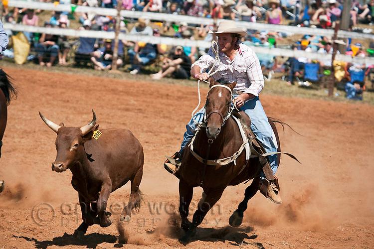 Steer wrestling (also known as bulldogging) competition at Mt Garnet Rodeo.  Mt Garnet, Queensland, Australia