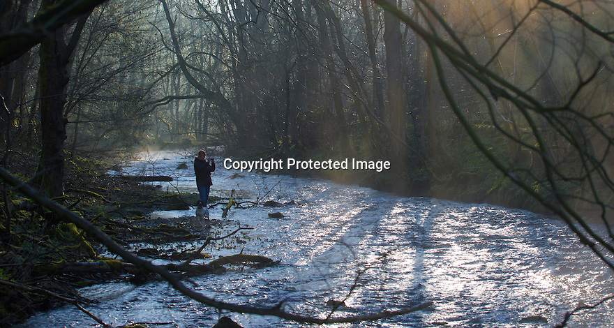 30/03/16<br /> <br /> A dog walker stops to take a photograph as the early morning spring sunlight filters through the trees in Lathkill Dale in the Derbyshire Peak District near Youlgreave.<br /> <br /> All Rights Reserved: F Stop Press Ltd. +44(0)1335 418365   www.fstoppress.com.