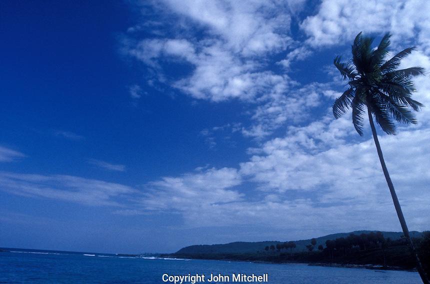 Beach and palm trees, Barahona, Dominican Republic