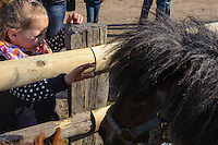 Pferdeverkauf traditioneller Ochsenmarkt in Wedel, Schleswig-Holstein, Deutschland<br /> horse trade at traditional ox-market in Wedel, Schleswig-Holstein, Germany