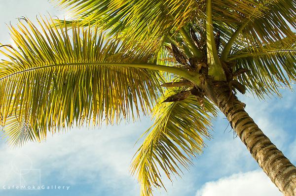Warm light on a coconut palm