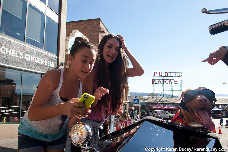 "Teenagers stop to take a ""selfie"" next to Lucy, a six-year-old pit bull mix, at the Pike Place Market in Seattle, Washington. Lucy rides in a sidecar next to her mom, Brande Schweitzer, who drives a Harley-Davidson."
