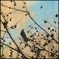 Mixed media encaustic painting with photography of bird in branches with berries