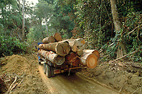 Load and transport of trees trunks to the Sawmill